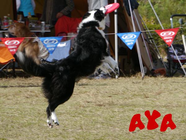 AYA2.JPG
