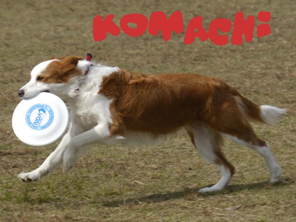 KOMACHI.JPG
